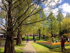 #keukenhof #keukenhofgardens #keukenhof2016 #tulipans #nofilter #landscapestyles #vscoholland #passione_fotografica #nofilter #amazingview #amazing_pictures #best_photogram #color #vsco #vscocolor #lifetime #tree_captures #nature_perfection #nature_brilliance #amazing_holland #loves_flowers_ #loves_holland #bestoftheday #photo_art #landscapelovers #landscapestyles_gf #landscapes_worlds by giu_redfish27