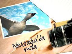 Fotoğraflarla doğa günlüğü: Mavi kazlar Video