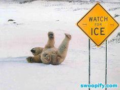 Beware Of Slippery Ice #humor #lol #funny