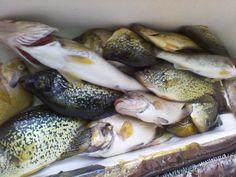 Yes omg. Best Fishing Days, Fishing Times, Food, Meals, Yemek, Eten
