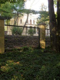 Patrz.pl Arch, Outdoor Structures, Garden, Plants, Longbow, Garten, Lawn And Garden, Gardens, Plant