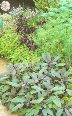 Growing herbs in your garden drive away pests.