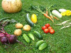 Moje Montessori Warzywa