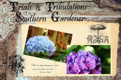 Trials & Tribulations of a Southern Gardener