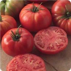 Champion II Hybrid - Tomato Seeds