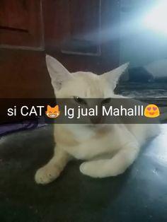 Ayu Kucing Lucu: