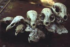 Bildergebnis für animal bones and skulls