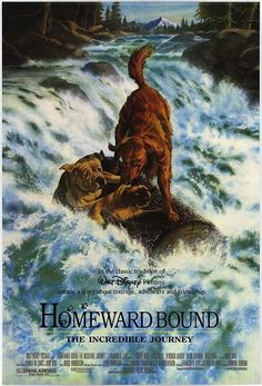 Homeward Bound (1993) | 31 Of The Most Underrated Kids Movies From The '90s