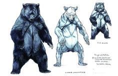 Bear drawing #anatomy #reference #photo #animal #creature #design #pose #body