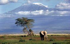 キリマンジャロ山 タンザニア