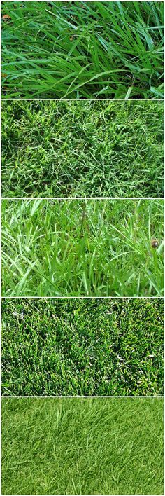 How to Choose the Right Lawn Grasses - #Flowers,PlantsPlanters #GardenDecor #Botanical #Decoration #Garden #Herb #Landscape #Lawn (source: 1001gardens.org)