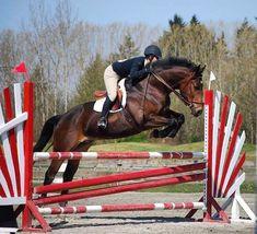 #firstdayofschool #schooltime #richmond #vancouver #vancity #endofsummer #equestrian