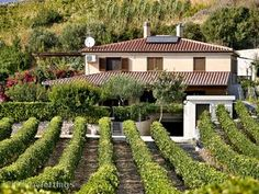 bosa house in vineyard Sardinia Holidays, Fb Like, Italy Travel, Stepping Stones, Rome, Terrace, Vineyard, Sweet Home, Houses