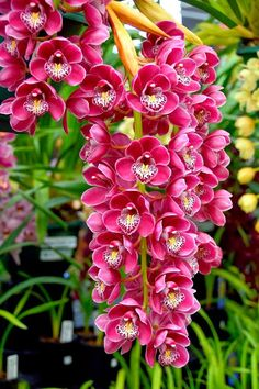 How to Grow Orchids Indoors as Houseplants