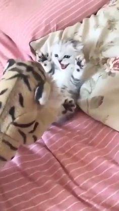 Cute Little Kittens, Cute Baby Cats, Cute Kitten Gif, Kittens Cutest, Cute Dogs, Baby Animals Super Cute, Cute Little Animals, Funny Cute Cats, Cute Funny Animals