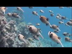 A beautiful video for a great cause, the protection of the ocean.