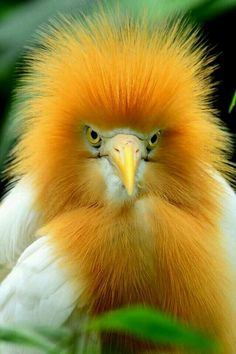 Did you know that redheads also exist in the animal kingdom? Get to know 18 beautiful and charming animals that'll add some color to your day! Pretty Birds, Beautiful Birds, Animals Beautiful, Cute Animals, Pretty Animals, Wild Animals, Brave Animals, Yellow Animals, Kinds Of Birds