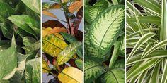 🌷🌿🌺 Είναι καιρός να δοκιμάσουμε κάτι πρωτότυπο και εντυπωσιακό, φυτά που βγάζουν ρίζες και μεγαλώνουν μέσα σε βάζο με νερό! Εκτός από πολύ όμορφο, είναι και εξαιρετικά εύκολο, καθώς τα συγκεκριμένα φυτά χρειάζονται ελάχιστη φροντίδα και είναι πολύ πιθανό κάποια από αυτά να τα έχουμε ήδη στο σπίτι μας.