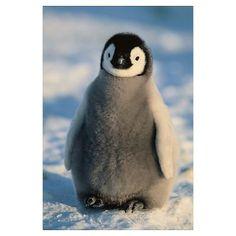 baby penguin | CafePress > Wall Art > Posters > Baby Emperor Penguin Poster