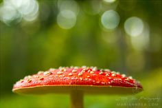 Poisonous bokeh by Mariann Rea on 500px
