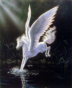 Amazon.com: Mythical White Pegasus Sue Dawe Horse Wall Decor Art ...