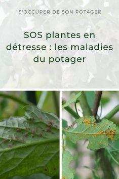 SOS au potager ! Comment soigner naturellement les maladies du potager ?