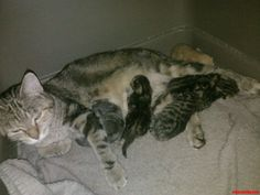 so my kitty had kittens last night. - http://cutecatshq.com/cats/so-my-kitty-had-kittens-last-night/