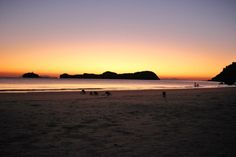 Kangaroos at Dawn - Cape Hillsborough - This Wild Life of Mine Wildlife Tourism, Big Country, Coast Australia, Kangaroos, Destin Beach, Wild Life, East Coast, Fresh Water, Dawn