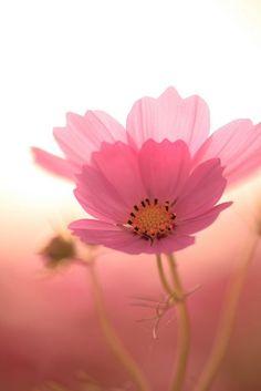 quite simply beautiful www.liberatingdivineconsciousness.com