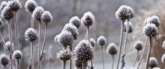Mickey Rathbun: Clean up the garden now or wait until spring? Fall Perennials, Bokashi, Garden Park, Green Art, Winter Garden, Clean Up, Dandelion, Action, December