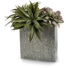 John-Richard Slate Succulents ($288) ❤ liked on Polyvore featuring home, home decor, floral decor, plants, fillers, flowers, decor, flower home decor, narrow wall shelf and artificial flower arrangement