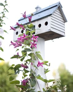 Princess Diana Clematis and bird house {inspiration} Dream Garden, Garden Art, Pink Garden, Garden Design, Beautiful Birds, Beautiful Gardens, Bird Feeders, Squirrel Feeder, Farm Life