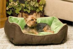 Self Warming Lounger Dog Bed - Mocha and Green *** You can get more details by clicking on the image.