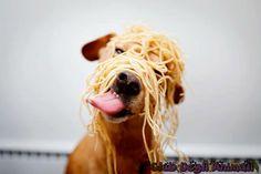 La prossima volta è meglio metterli nel piatto, si mangiano meglio ;)  #immagini #animali