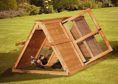 Chicken coops to help breed #chickens healthy
