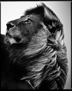 Into the Wild-The Protector Photo by Laurent Baheux