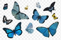 Common Blue Butterfly, Holography, Butterfly Illustration, Cute Emoji, Pics Art, Free Illustrations, Sticker Design, Vector Art, Free Images