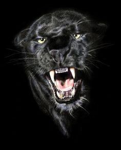 Snarling black panther. [http://tap1691.tumblr.com/post/23286841895]
