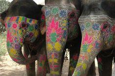 three rainbow elephants