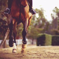 Equestrian Equipments Tips All The Pretty Horses, Beautiful Horses, Animals Beautiful, Horse Girl, Horse Love, English Riding, Jolie Photo, Equine Photography, Horse Pictures