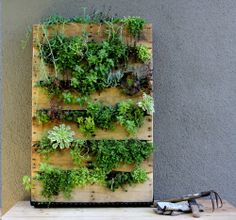 Recycled Pallet Vertical Garden - Very little room on your urban porch or backyard? How about maximizing the space you have by growing up? I'll be using a pallet sitting in my back yard to plant garden center annuals or possibly native succulents. Old Pallets, Pallets Garden, Recycled Pallets, Wooden Pallets, Pallet Gardening, Indoor Gardening, Pallet Wood, Recycled Garden, Gardening Tips