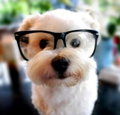 #dog glasses#