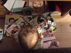 Čítajúci rodičia píšu: Zarka a mamine časopisy