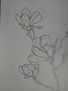 Flowers sketch pencil °>°