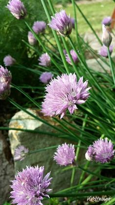 Így hozz létre fűszerkertet a balkonon | Balkonada Plants, Plant, Planets