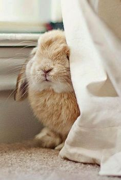 Soft and cuddly bunny Funny Bunnies, Baby Bunnies, Cute Bunny, Bunny Rabbits, Easter Bunny, Happy Easter, Animals And Pets, Baby Animals, Cute Animals