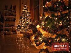 vianočné stromčeky - Hľadať Googlom