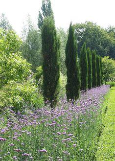 Zypressen Lavendel