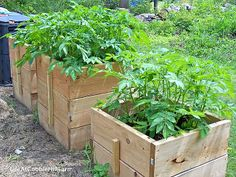 Life At Cobble Hill Farm: Homesteading Where You Are: Grow