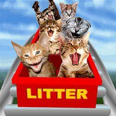Post Comico ™ : gatos em ação